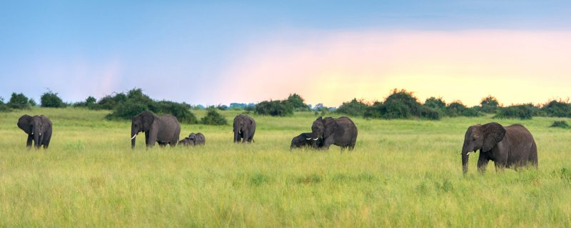 Botswana has the highest elephant population in Africa.