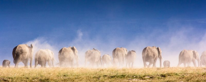 Africa's a large, diverse continent, but we'll give you the inside scoop on the best time to visit Africa on safari.