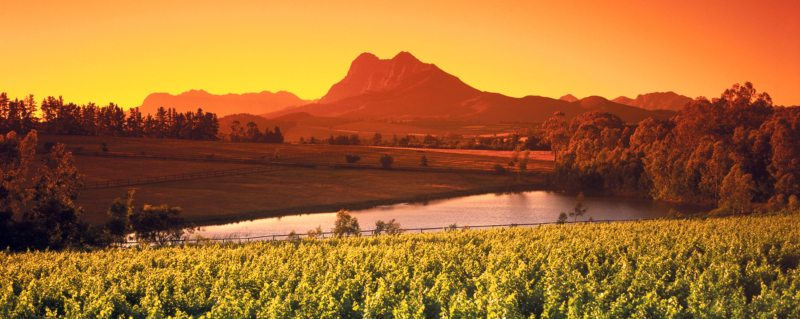 The Cape Winelands alone are good enough reason to visit the Western Cape.