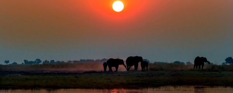 Elephant are a constant feature of luxury Botswana safari trips