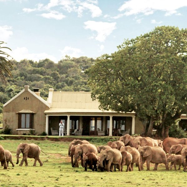 Addo Elephant National Park is said to be home to the densest elephant population on earth.