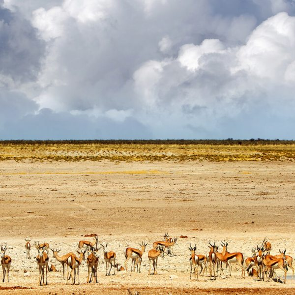 best time to visit Namibia on safari
