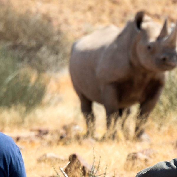Desert Black Rhino tracking lets you get close to rhino.