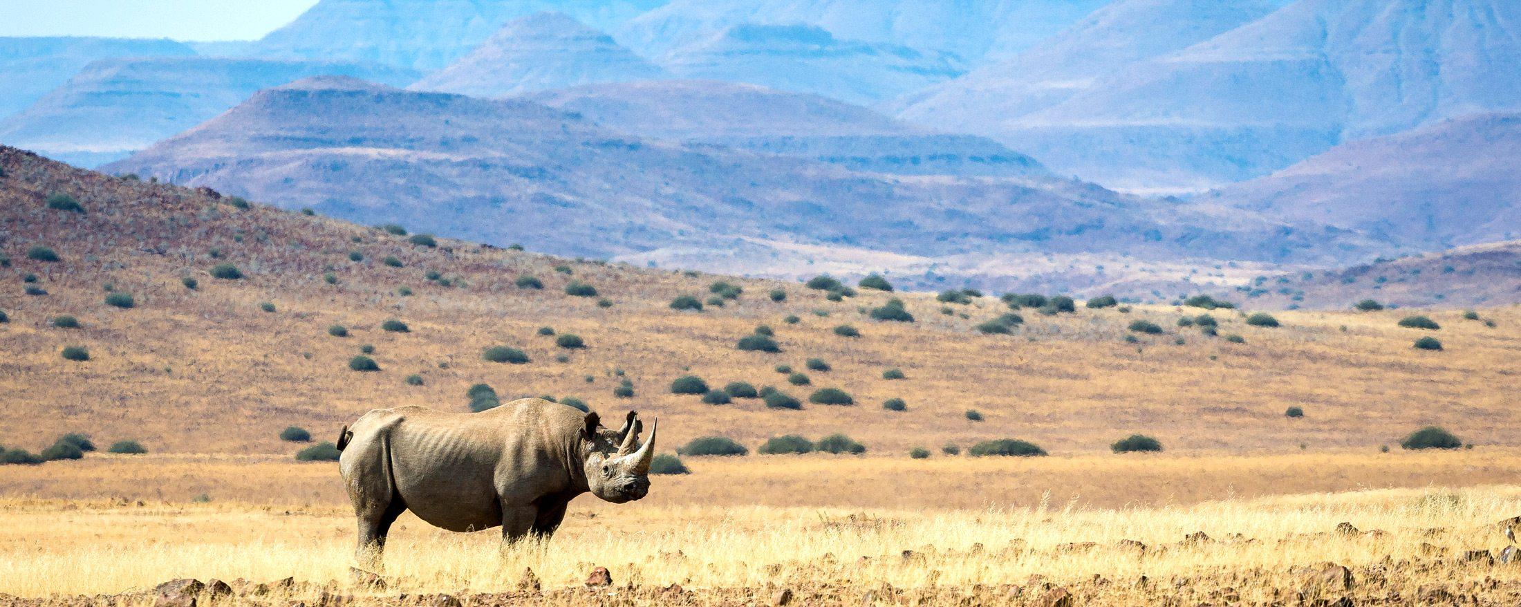 Desert-adapted black rhino can be found near Desert Rhino Camp.