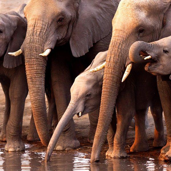 Etosha Hide | Elephant always seem to have fun at waterholes.
