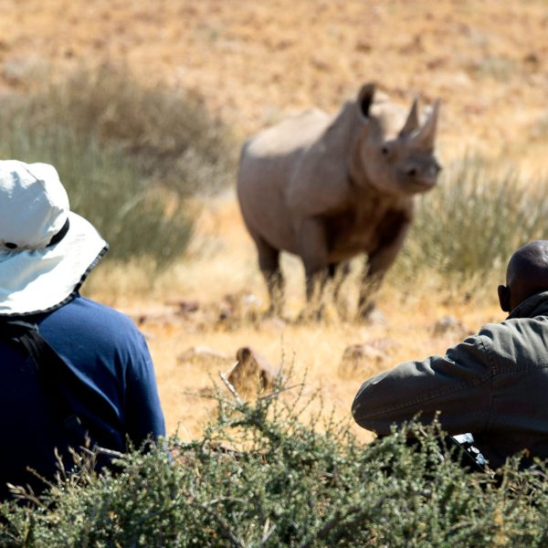 Rhino tracking lets you get close to rhino. © Wilderness Safaris