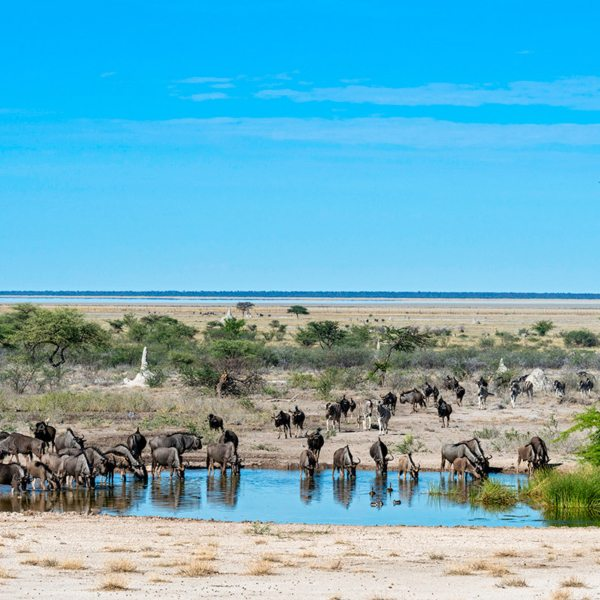 The waterhole at Onguma The Fort attracts lots of thirsty animals. © Onguma