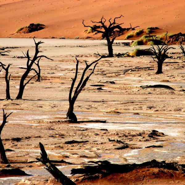 Deadvlei has a surreal landscape. © Peter Dunning