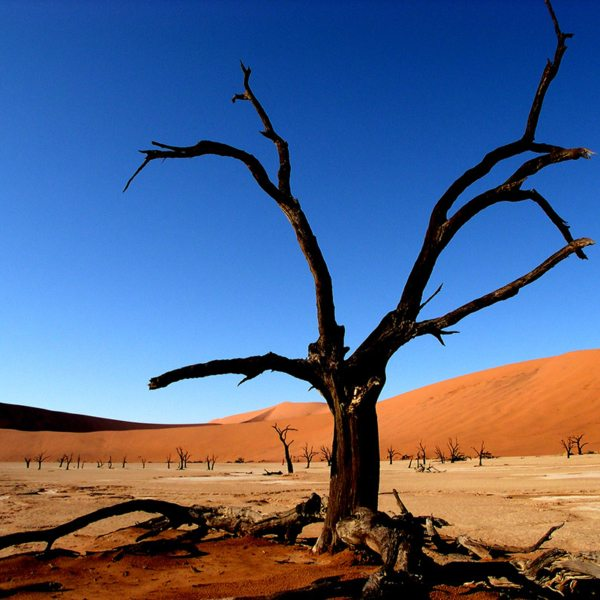 Capturing the trees at Deadvlei is popular with photographers. © Peter Dunning