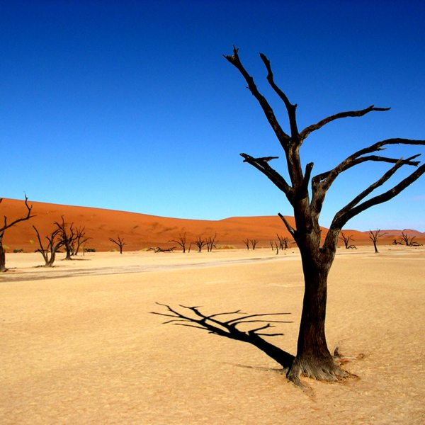 The trees at Deadvlei make impressive shadows on the light clay. © Peter Dunning