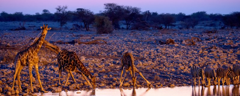 Sunset is a magical time to visit Etosha's waterholes.
