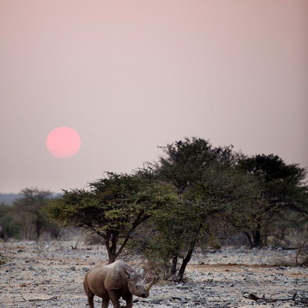 An early start may reward you with a sunrise rhino viewing.