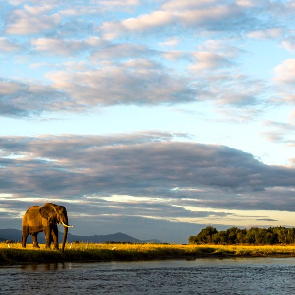 Ruckomechi Camp is set in the magnificent Mana Pools area.