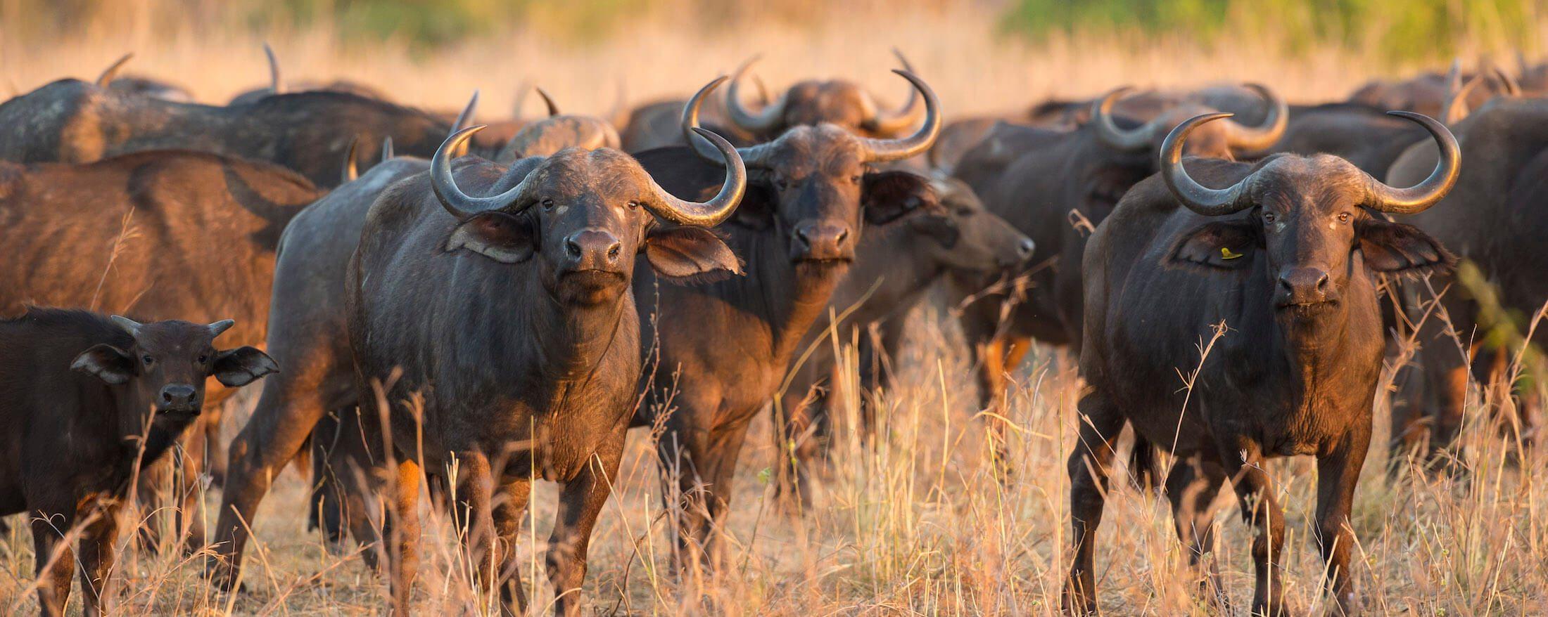 Getting The Best Value For Money on Safari | Art Of Safari