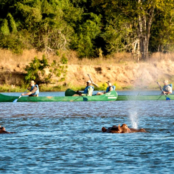 You can go on canoe safaris from Ruckomechi Camp. © Wilderness Safaris