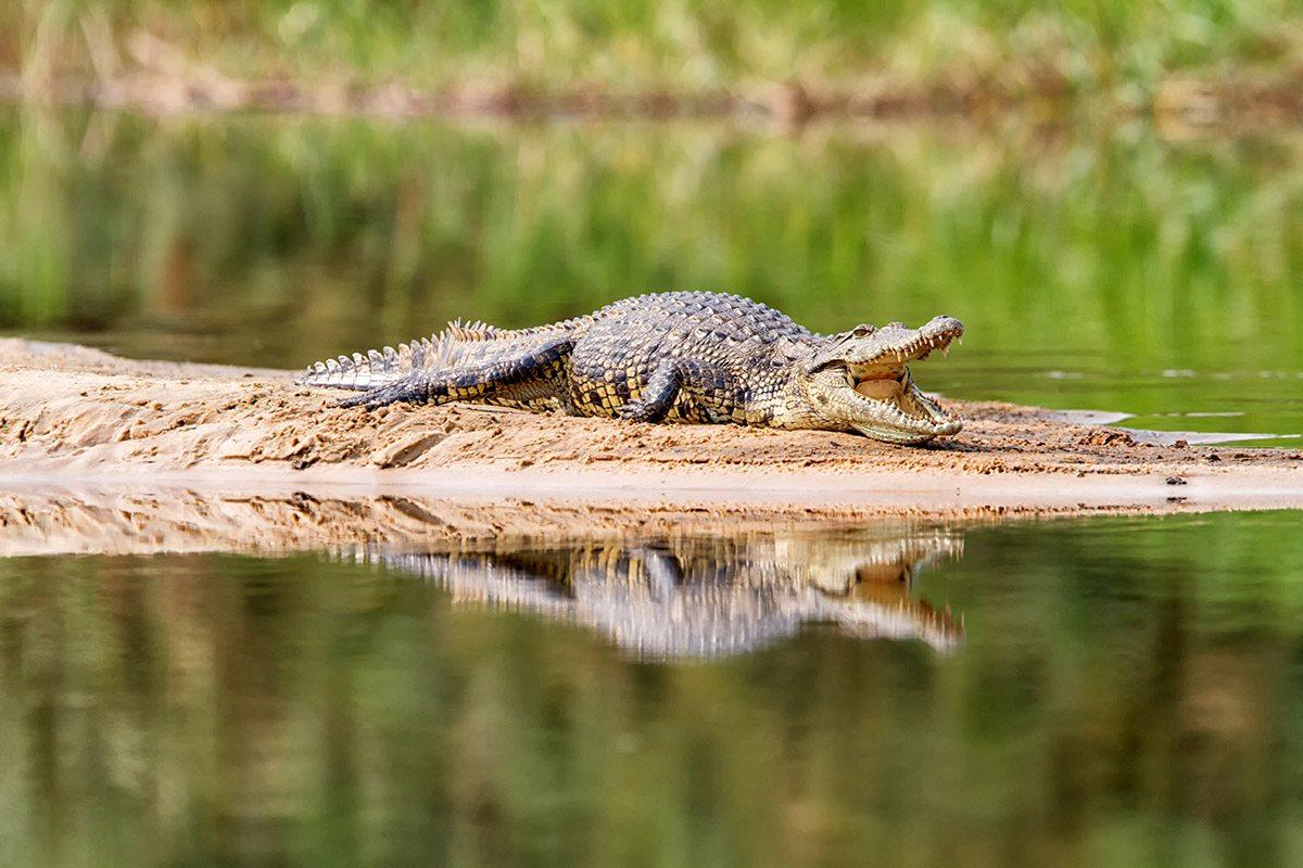 Experience A Zambezi River Canoe Safari | Art Of Safari