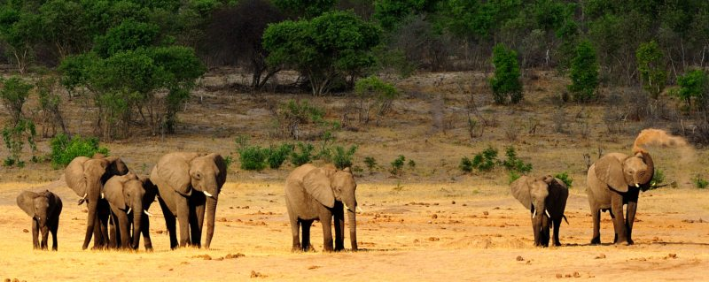 You'll see large herds of elephant on your luxury Hwange safari.