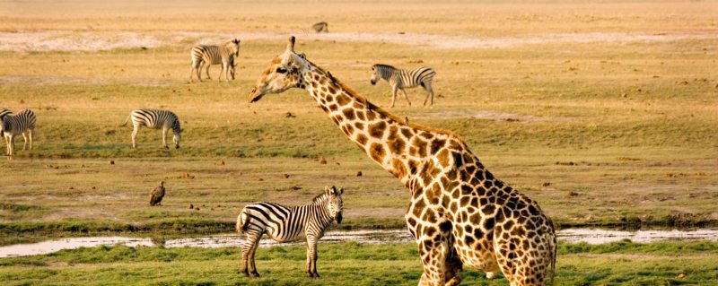 Chobe floodplains safari | The Chobe Riverfront has arguably Botswana's densest concentration of wildlife.