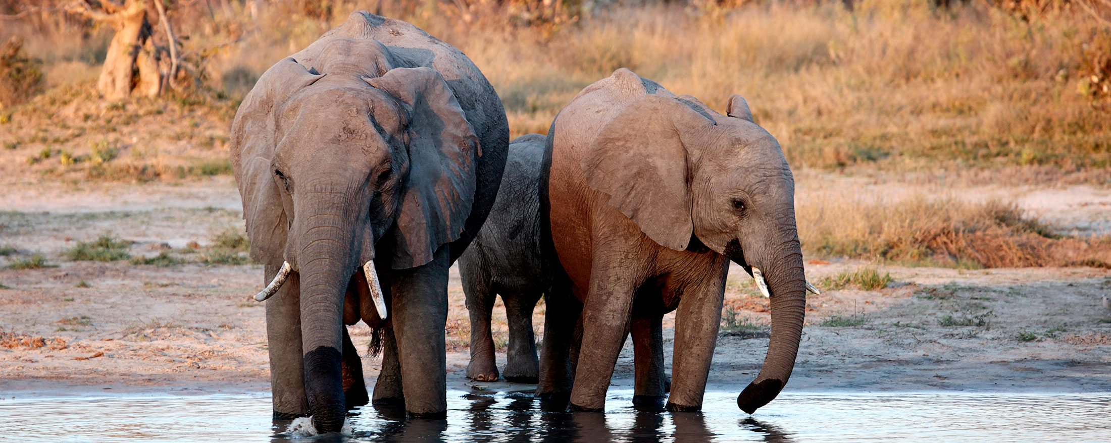 Chobe safari | The Savute Channel or 'Stolen River' floods and dries up on its own mysterious schedule.