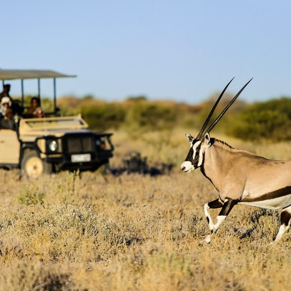 Oryx are always worth stopping for in the Central Kalahari. © Wilderness Safaris