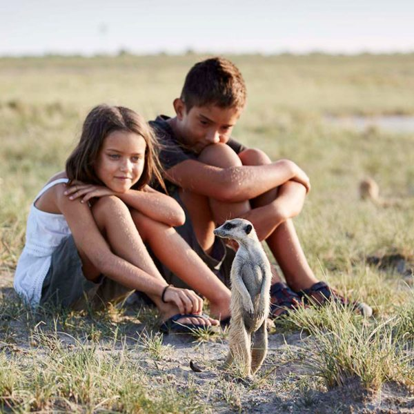 The Makgadikgadi meerkats are comfortable being close to humans. © Uncharted Africa