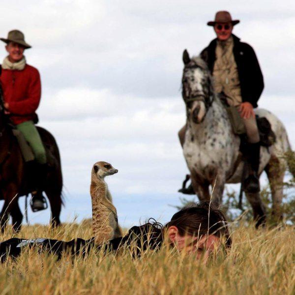 Humans ride horses, while the Makgadikgadi meerkats ride humans! © Uncharted Africa