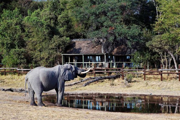 Elephant come right into camp at Savute Safari Lodge. © Desert & Delta Safaris