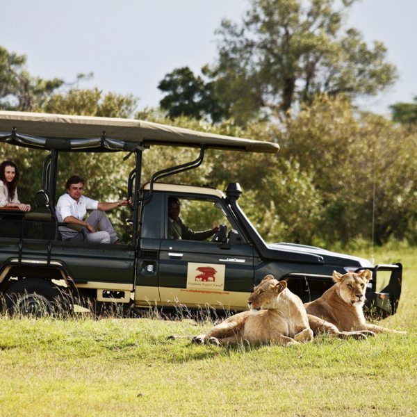 Big cats like lion can be seen near Elephant Pepper Camp. © Elewana Collection