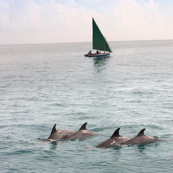 Bazaruto Archipelago Holiday | Dugong Experience