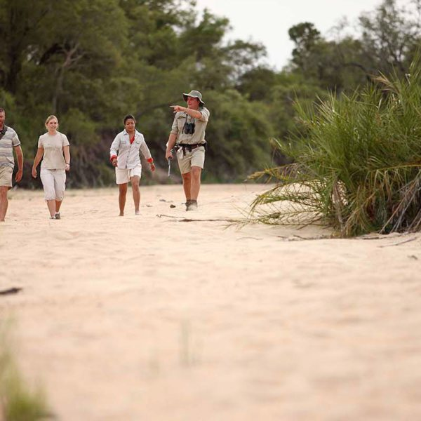 Ngala Tented Camp is in a private reserve, so you can go on walking safaris. © &Beyond