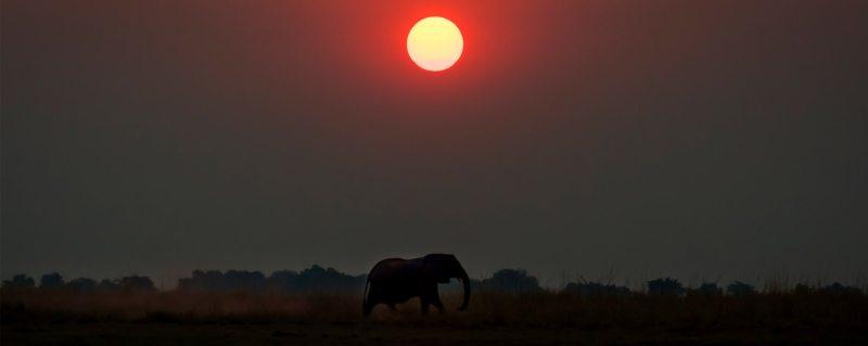 Elephant are a highlight of safaris on the Chobe Floodplains.