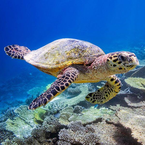 Benguerra IslanBazaruto Archipelago Holiday | Dugong Experienced Holiday | Dugong