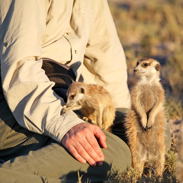 The Makgadikgadi meerkats are very sociable creatures. © Uncharted Africa