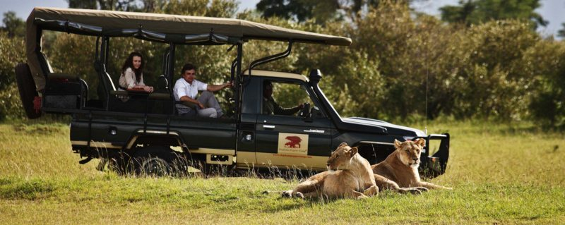 Big cats like lion can be seen near Elephant Pepper Camp.