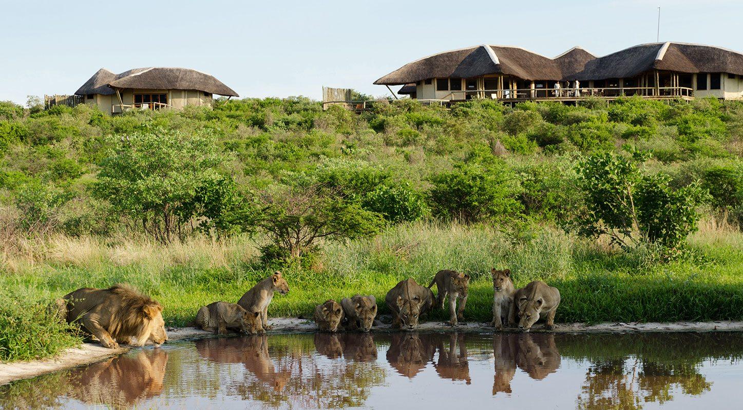 Botswana Safari Black Maned Lion Stolen River Amp Beach