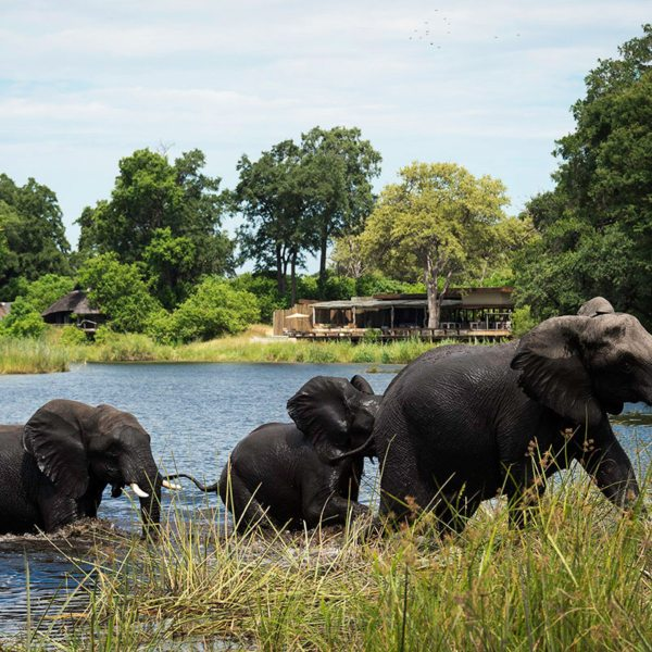 Elephant often frolic in the lagoon at Kings Pool. © Wilderness Safaris