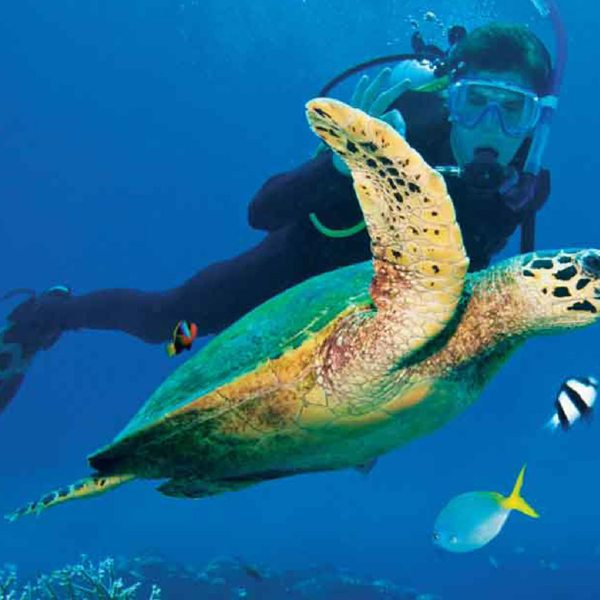 Get close to the marine life by scuba diving from Vamizi Island. © &Beyond