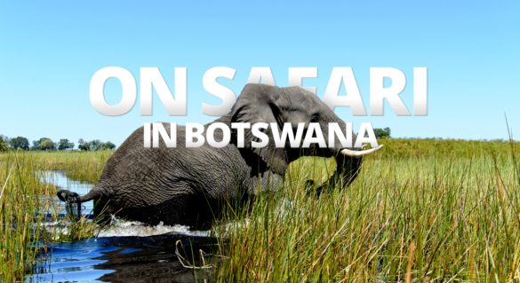 Exploring Botswana by vehicle during your African safari will let you see her many elephant.