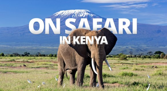 If you drive around Kenya on your African safari you might capture the classic scene of an elephant against Kilimanjaro.