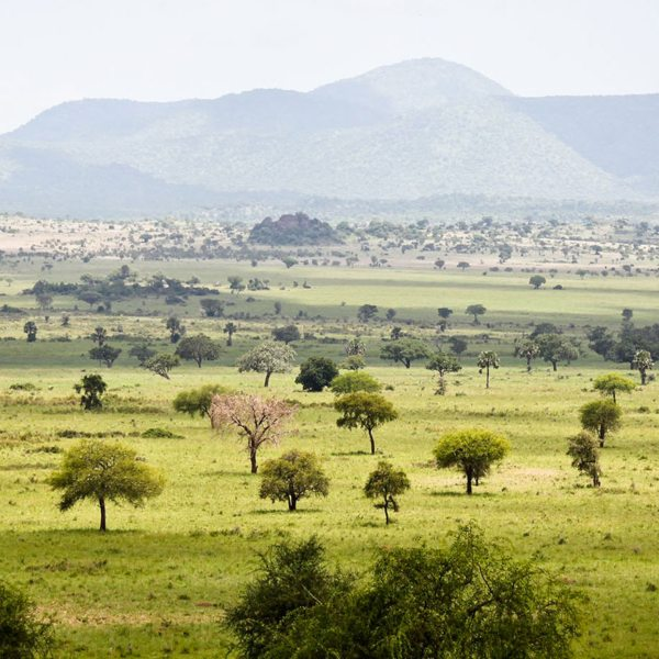 Kidepo Valley Safari | Kidepo Valley National Park is Uganda's wildest and most isolated reserve.