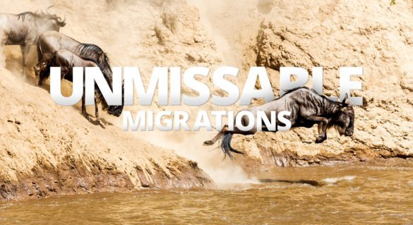 The Great Wildebeest Migration is among Africa's most awe-inspiring experiences.