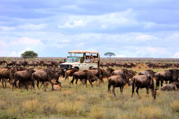 A stay at Sanctuary Kichakani Serengeti Camp will ensure you see the Great Wildebeest Migration. © Sanctuary Retreats