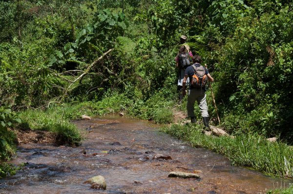 Make sure you dress for the jungle when going gorilla trekking in Bwindi. © Uganda Safari Company