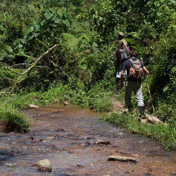 Make sure you dress for the jungle when going gorilla trekking in Bwindi. © Uganda Safari Company