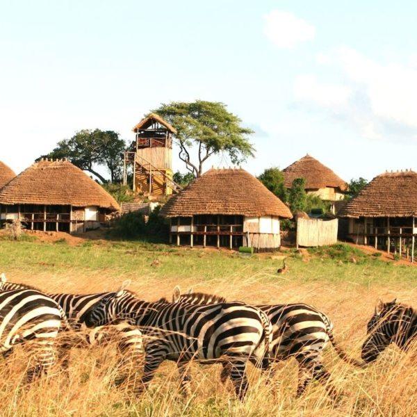 Game come close to camp at Apoka Safari Lodge. © Uganda Safari Company