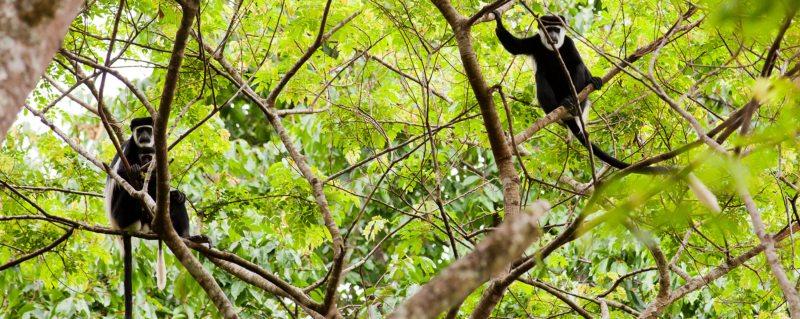 Luxury Uganda safari trips take you to magical jungle realms.