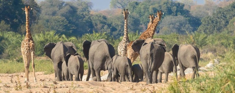 African Travel Deals & Special Safari Offers | Art Of Safari