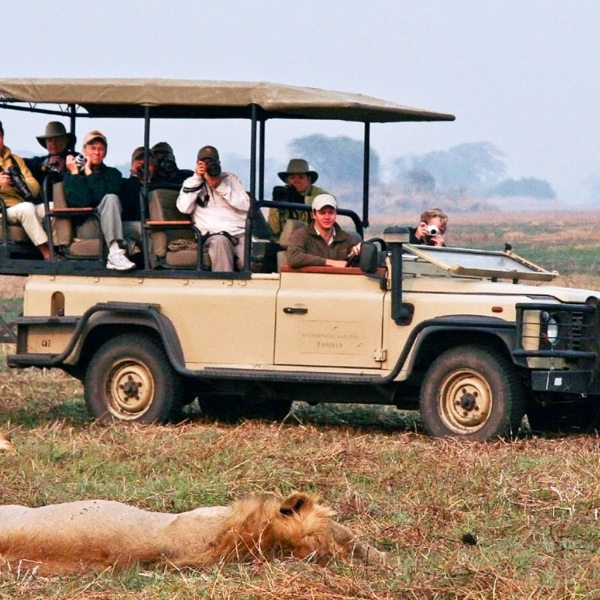 Game drives from Busanga Bush Camp might take you to lion.