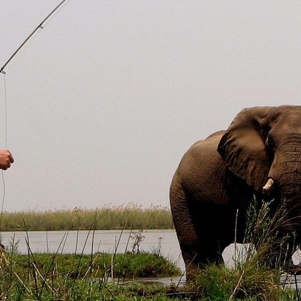 Be careful not to catch an elephant when tiger fishing in Zambia.