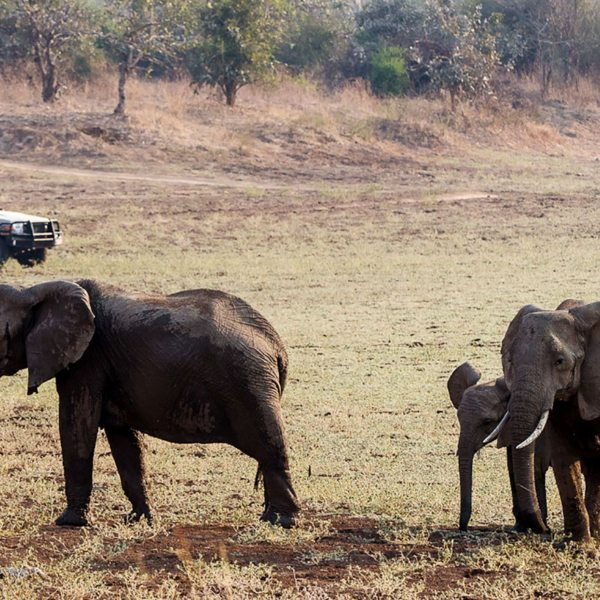 You'll see elephant on your game drives from Tena Tena.